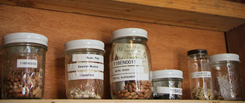 Seed-Library-Blog-Pic